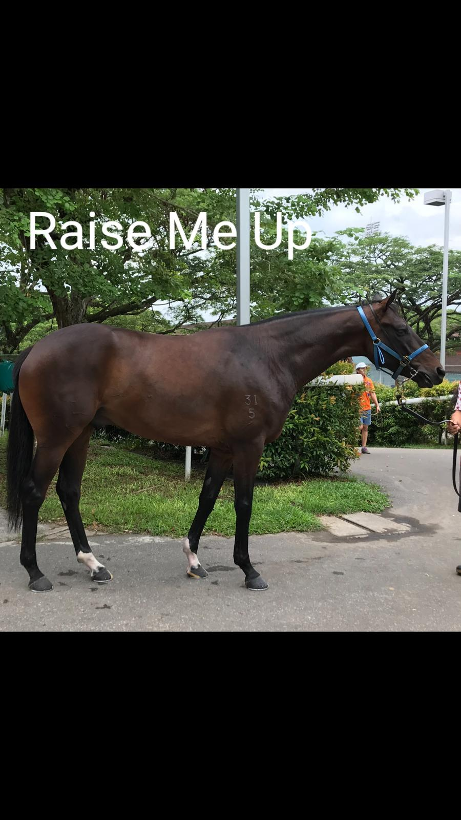 Horse for Sale | Selangor Turf Club